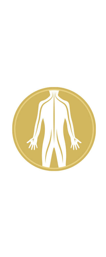 Gold circle with white full body and nerves representing Nerve certification.